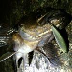 プラッキング-春メバルを自作ルアーで釣る!