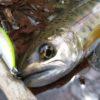 春先の渓流は朝練ではなく、日中釣行!